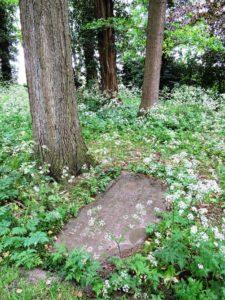 Afb. 1. De zerk van de jonggestorven barones Van Heeckeren van Brandsenburg temidden van het welig bloeiende fluitekruid.